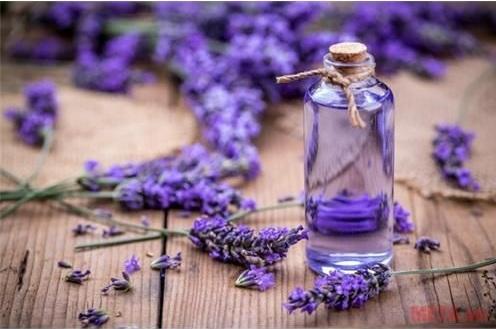 Serum Lavender Organic
